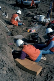 Des archéologues fouillent le site Cerutti Mastodon, sur... (AFP) - image 2.0