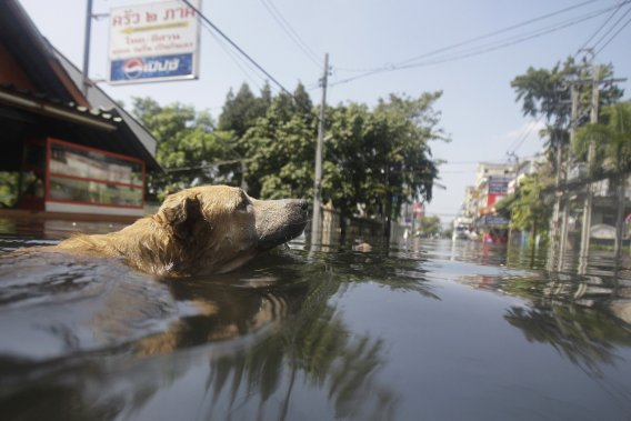 Hausse des catastrophes naturelles: le changement climatique montré du doigt