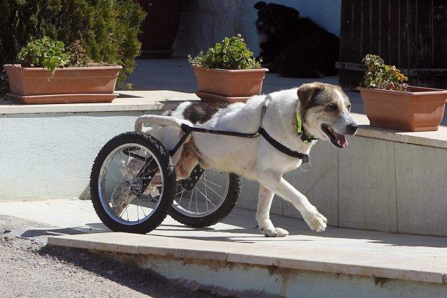 La maturité du chien intervient donc vers 5... (Photo Reuters)