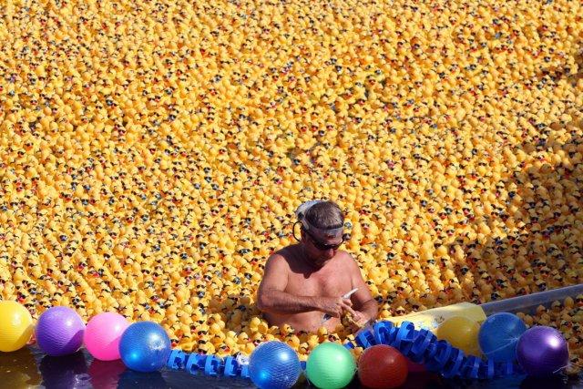 Une flottille de 12 000 canards en plastique jaunes a été lâchée dimanche sur... (Photo Elizabeth Ruiz, AFP)