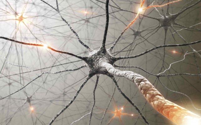 Le cerveau contient environ cent milliards de neurones,...