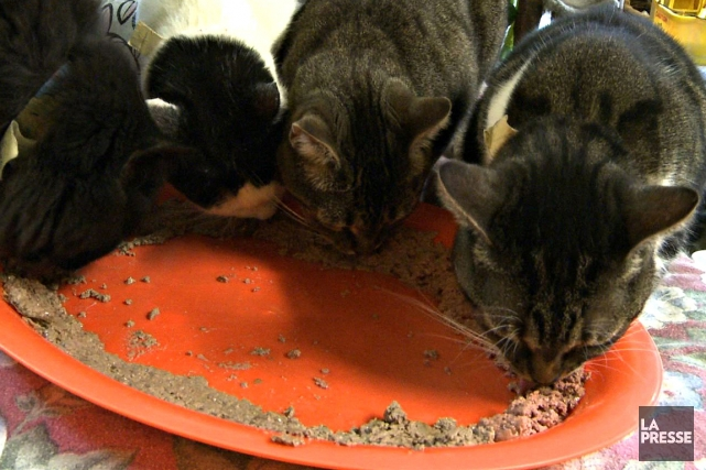 Un Japonais aimait tellement les chats qu'il en nourrissait 120 mais ils lui... (Photo archives La Presse)
