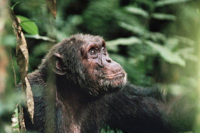 Le parc national des Virungaabrite une biodiversité exceptionnelle.... (PHOTO WWF)