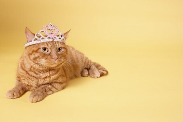 Dans leDictionnaire des chats illustres, les trois auteures... (PHOTO GETTY IMAGES)