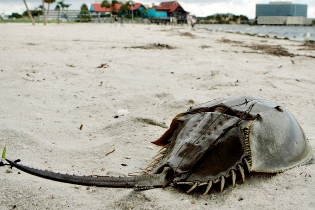 Ces animaux à la carapace en forme de... (photo archives ap/gizmodo.com)
