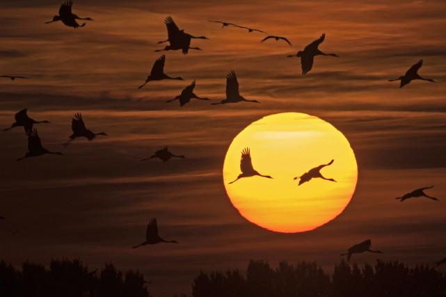 Le réchauffement climatique aura un impact sur les... (Photo Jens Meyer, AP)