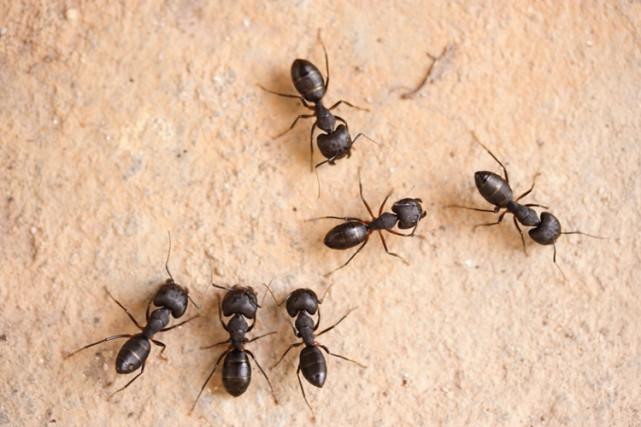 Les fourmis sont apparemment capables de reconnaître le... (PHOTOS.COM)