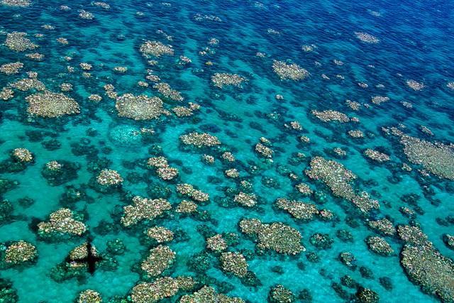 Le blanchissement des coraux est un phénomène de... (PHOTO AFP)