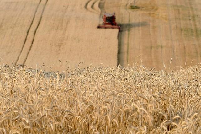 Un champ cultivé, en France.... (REMY GABALDA, archives AFP)