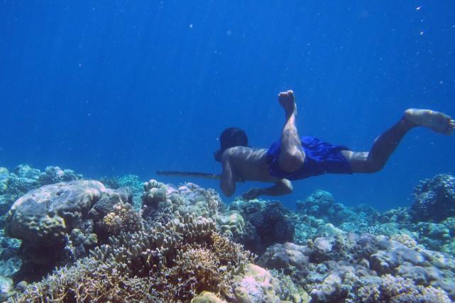 Le peuple Bajau passe jusqu'à 60% de sa... (PHOTO AFP/COURTOISIE MELISSA LLARDO)