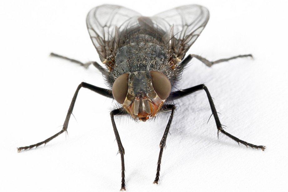 Des yeux de mouche pour modèles