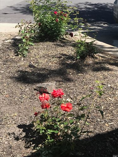 Tiny photo for 2413 Kathy Way, Calistoga, CA 94515 (MLS # 321035094)