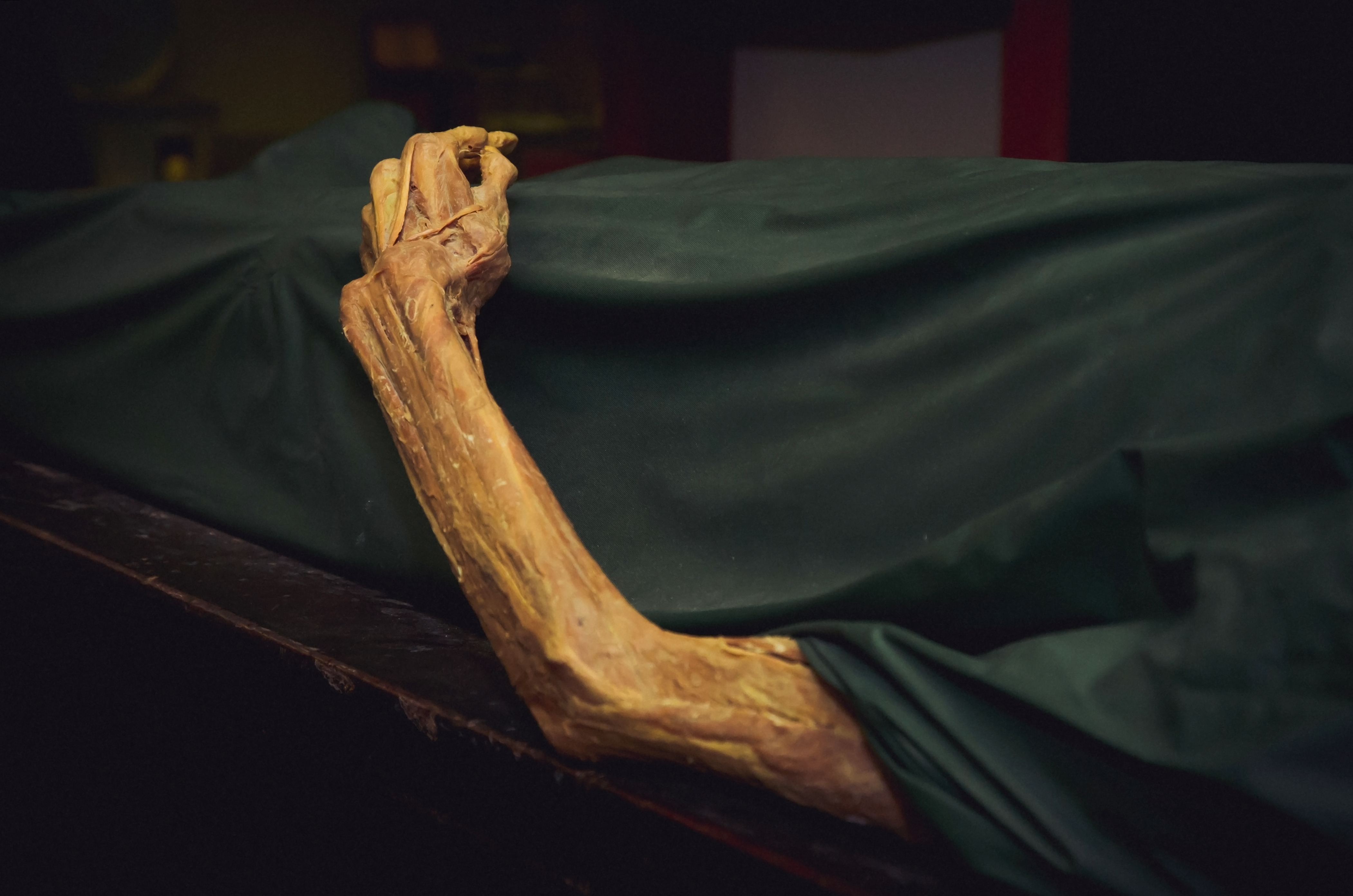 What A Forensic Scientist Doesn T Tell You 7 Postmortem