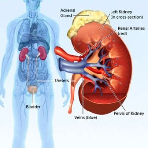 Kidney Pain Causes, Treatment, Symptoms, Pain Relief