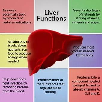 Image result for liver