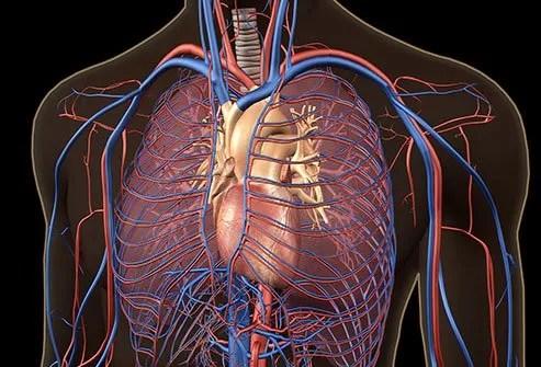 Pulmonary embolism definition, treatment, diagnosis, causes, symptoms, signs, prevention, death