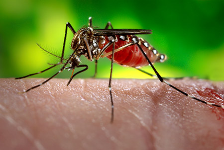 Image result for zika virus
