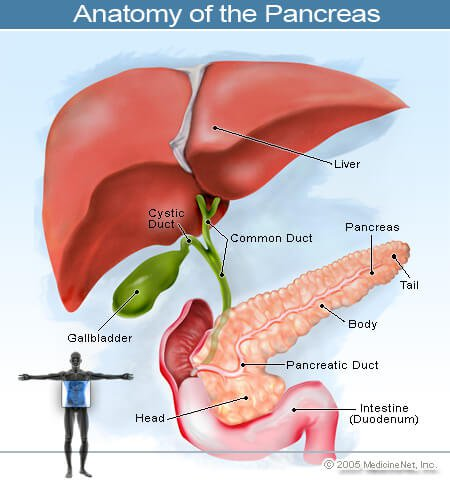 Pancreatic Cancer Symptoms, Stages, Survival Rates & Causes