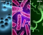 Bacterial Infections 101 Pictures Slideshow