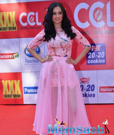 Evelyn Sharma In Pink Gown Charming Look At CCL Red Carpet 2015