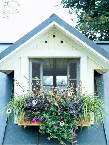 Easy Guides to Window Box Designs