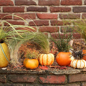Gourd Planters