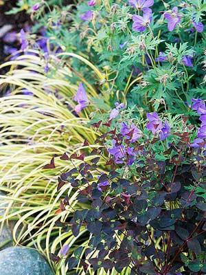 Lanscaped Purple Flowers