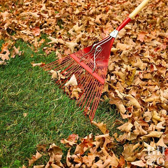 Easiest Way Rake Leaves
