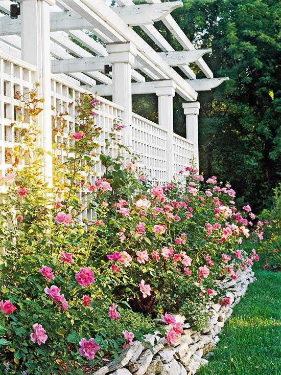 Garden Backdrop