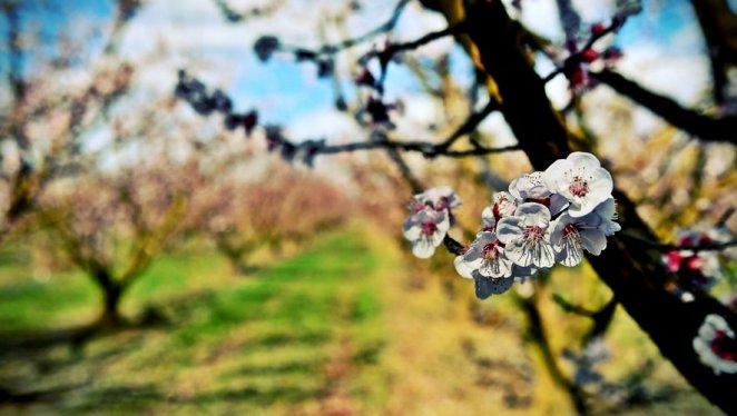 Chute des températures et gelées : pourquoi fait-il si froid cette semaine dans la région ?