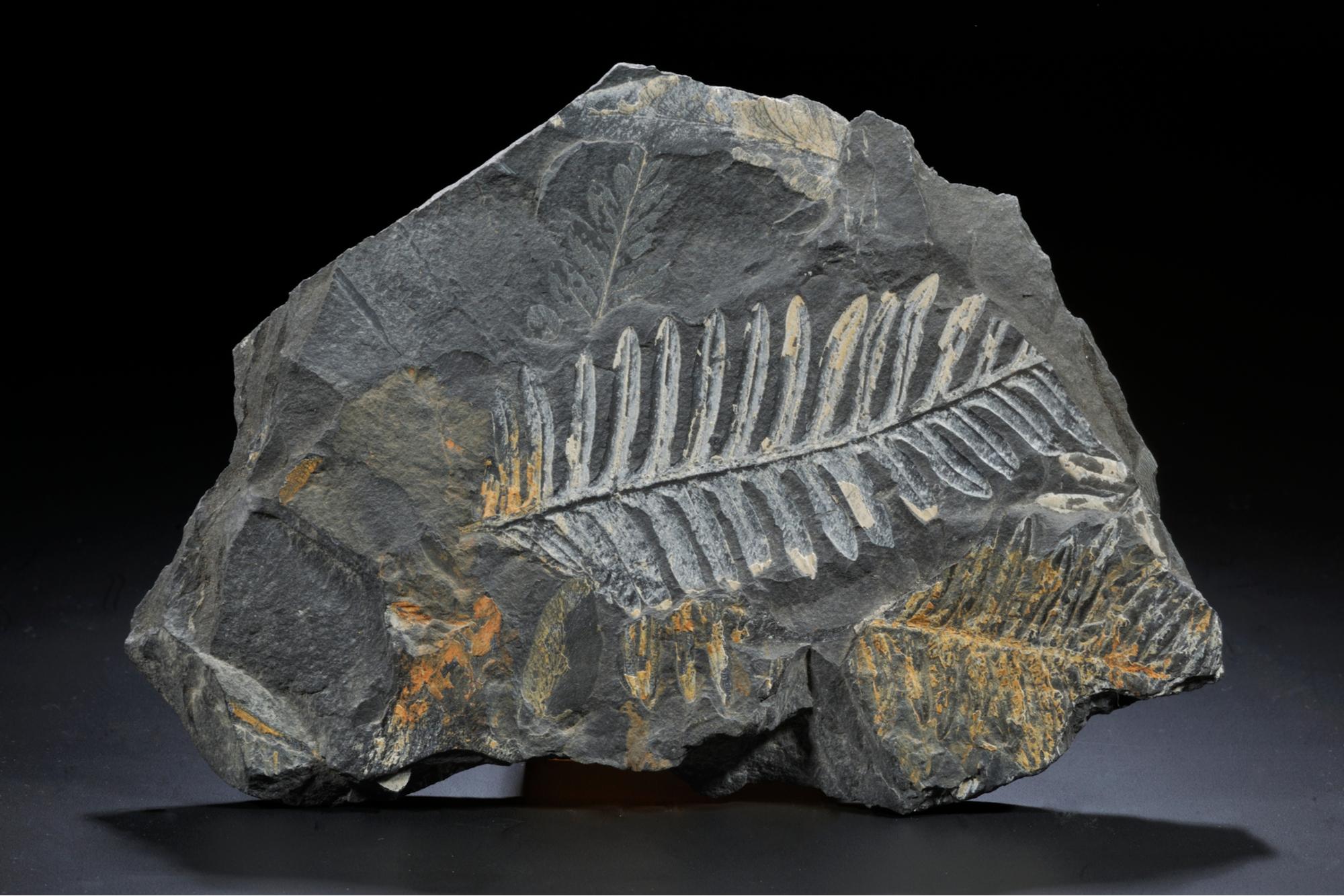 Worksheet Fossil Evidence
