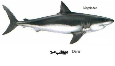 Megalodon and diver