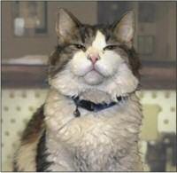 Oscar the Cat, Doombringer
