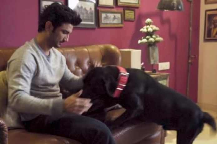 entertainment Sushant Singh Rajput Sent Funds for His Dogs Amar, Akbar, Anthony a Day Before Death: Farmhouse Caretaker