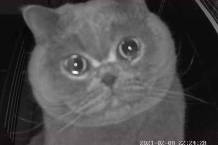 Watch: 'crying' cat appears on security camera as hooman leaves it alone at home during holiday   latest news live   find the all top headlines, breaking news for free online february 23, 2021