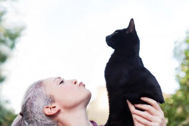 Cat ignores its owner