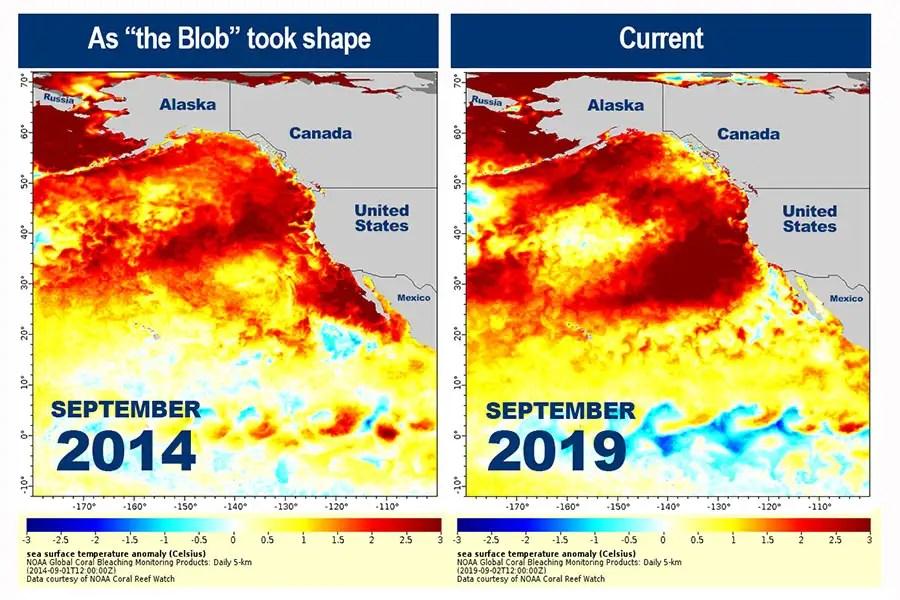 Northeast Pacific Marine Heatwave