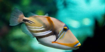 Fish can judge distances accurately just like land animals can