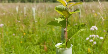 Make airlines and oil firms pay for tree-planting growth, says UK report