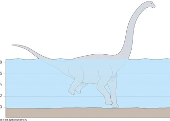 Dinosaur tracks seem to show giant sauropods wading on two front legs