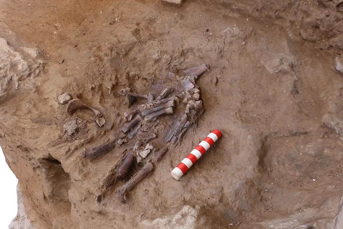 70,000-year-old remains suggest Neanderthals buried their dead