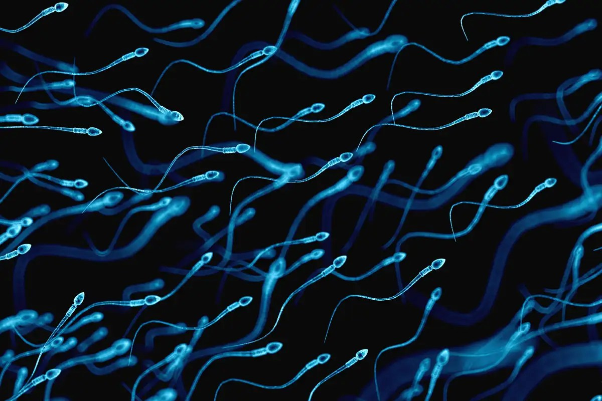 Sperm swim up to 70 per cent faster when they have a lazy tail
