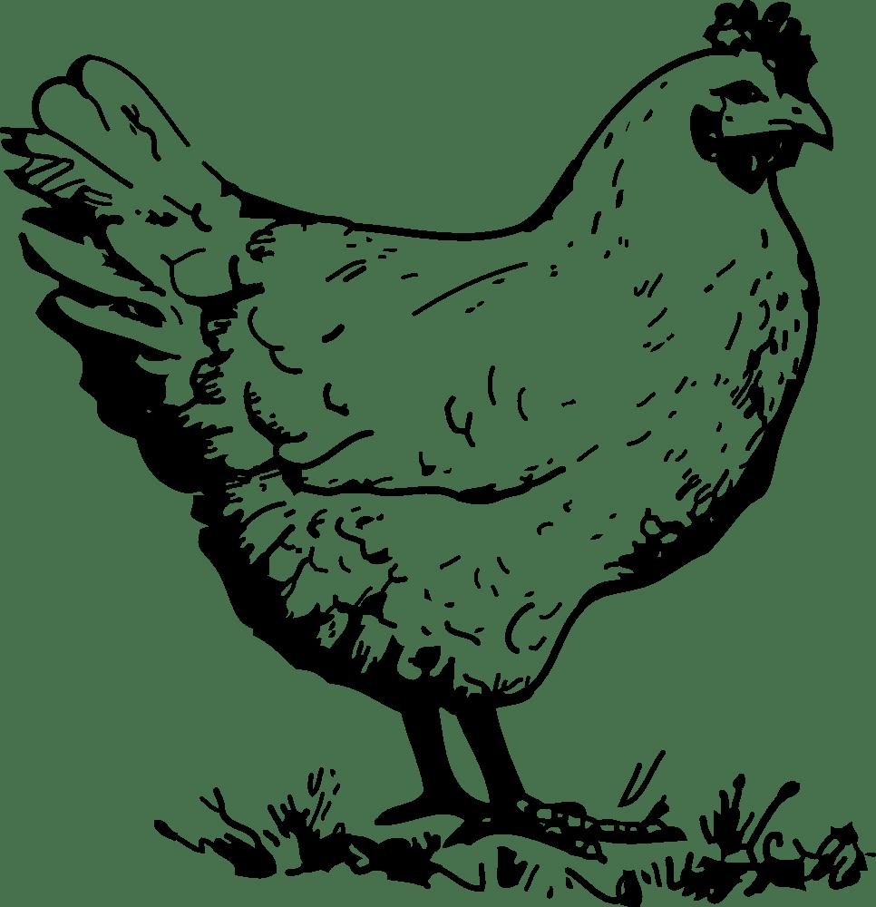 OnlineLabels Clip Art - Chicken (966 x 1000 Pixel)