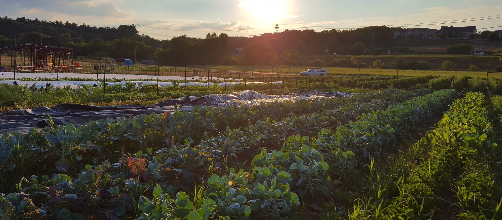 Student Farm Club To Host First Fall Harvest Festival