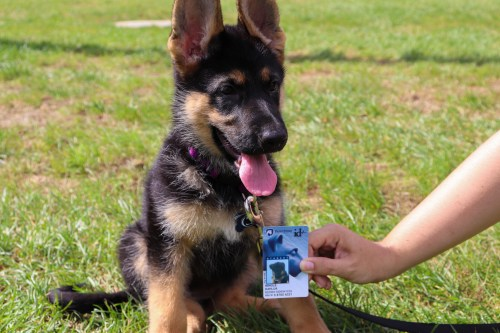 Meet The Penn State Puppy With Her Own Student ID