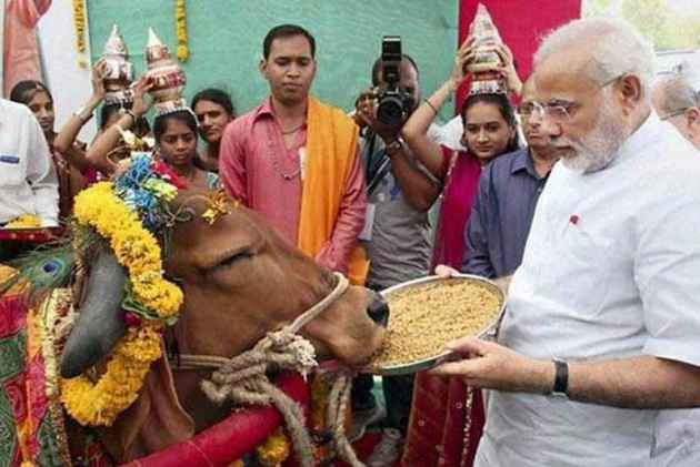 Image result for cow modi
