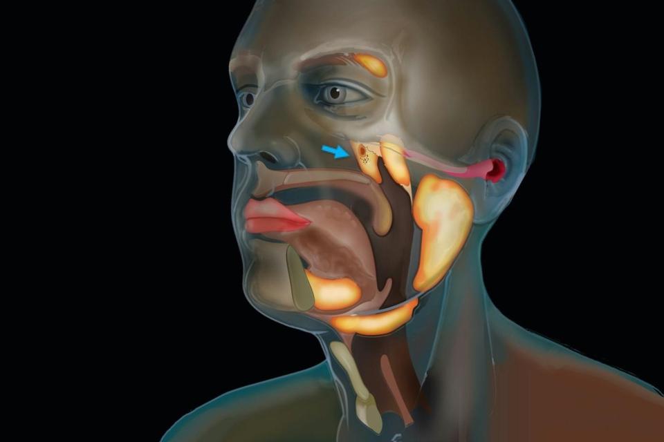 Investigadores descubrieron un nuevo órgano en la garganta