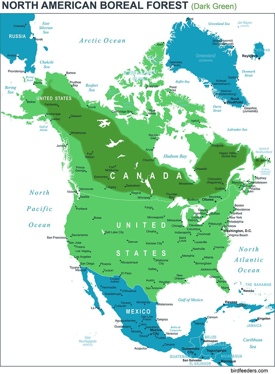 Northern Located America Ecosystem Where Forest