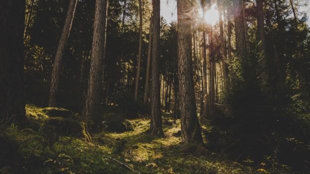木, 森の中, 森林