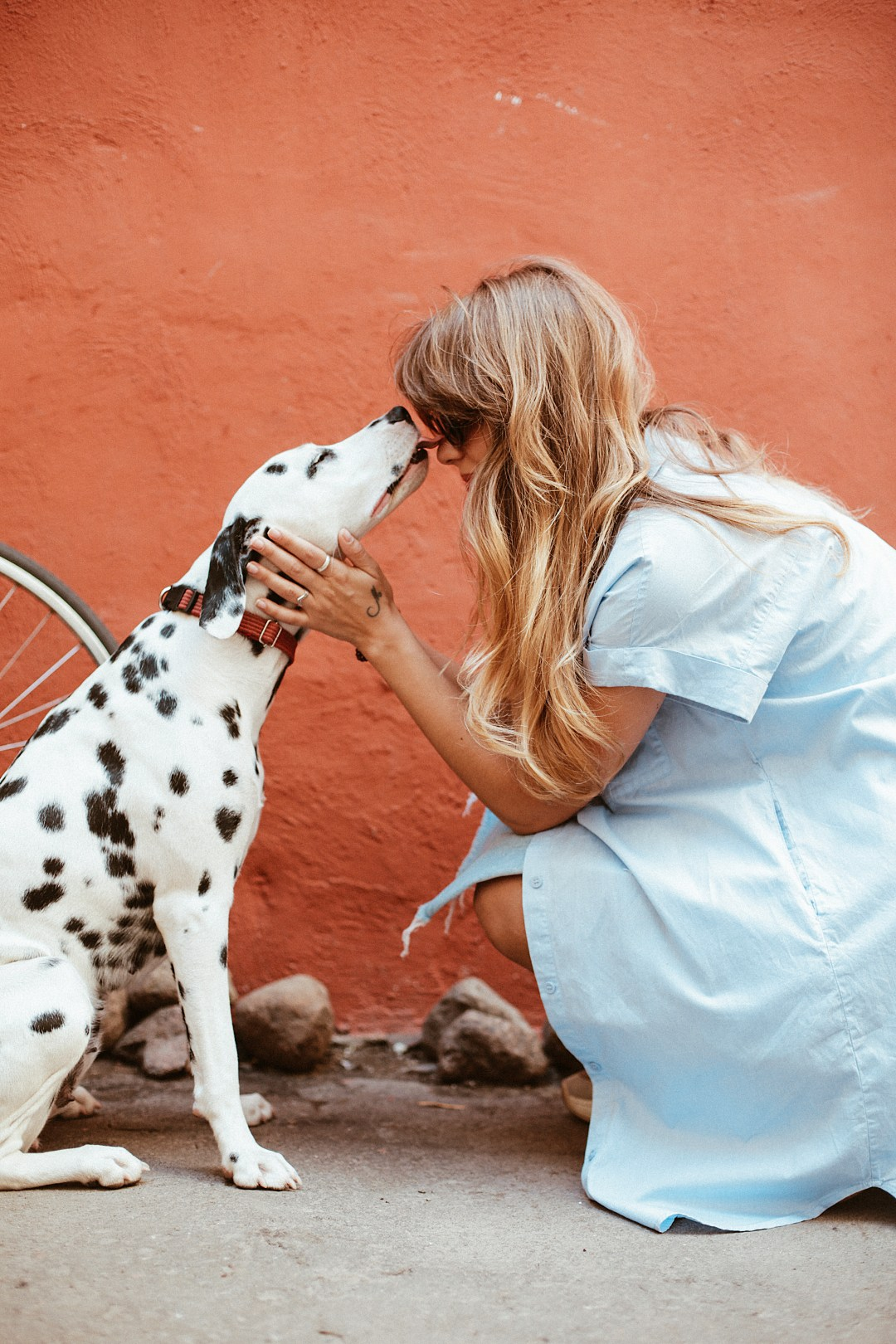 Show your love to dogs by taking them on walks!